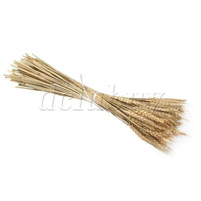 100 x Dried Wheat Bundle Dry Grass Plant Bouquet 60cm for Wedding Decor