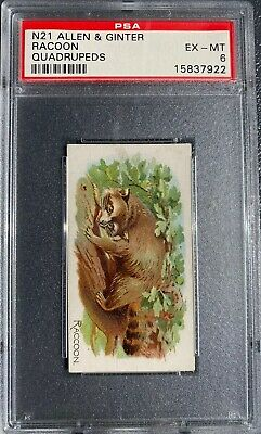 1890 N21 Allen & Ginter Quadrupeds RACCOON PSA 6 EX-MT