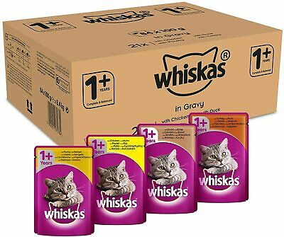 Whiskas 1+ Wet Cat Food of Chicken Poultry Turkey and Duck 100g (PACK OF 84)