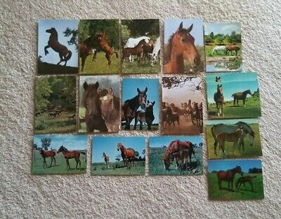 Horse Postcards/Greeting Card Fronts 1960s-National View-Nu-Color-Vue x16