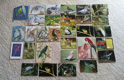 Bird Postcards & Greeting Card Fronts (Patricia Hall)- Vintage 1960s
