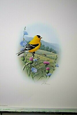 16x20 Four Songbird Prints by R Louque Signed /& Numbered Limited Editions