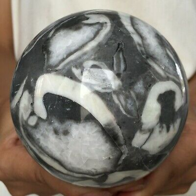 1050G Natural Thousand eye stone Sphere Seashell Fossil Polished ball 88MM Q52
