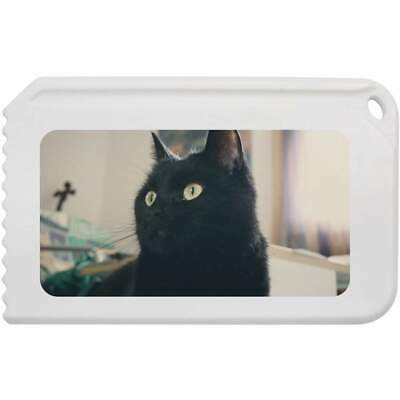 'Black Cat' Plastic Ice Scraper (IC00004695)