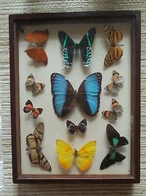 Vintage Real Butterfly Collection Mounted Wood Frame Shadow Box LOCAL SALE ONLY!
