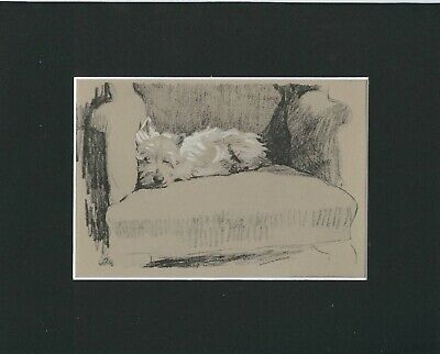 West Higland Terrier Puppy Dog Print 1934 by Cecil Aldin 8 X 10 Matted SWEET!