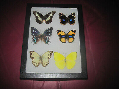 """6 real mounted butterflies framed 6x8"""" riker  mount collection #68-10"""