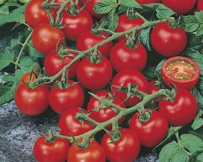 30 Graines De Tomate Cerise Red Cherry