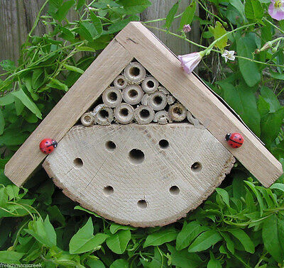BUG BOX - Beneficial Insect Habitat, Ladybirds, Solitary Bees, Mason, Leafcutter