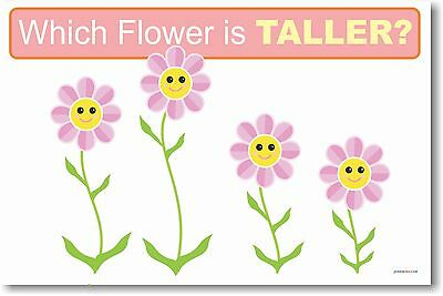 Which is Taller- Educational Kindergarten Math POSTER