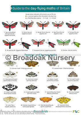 Laminated Field Guide to DAY FLYING MOTHS OF BRITAIN