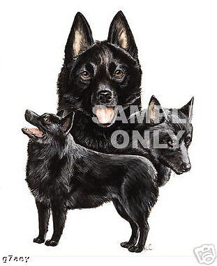 Schipperke  Dogs On  A Tote Canvas Bag