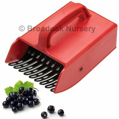 LARGE BERRY PICKER for Quick and Easy Fruit Harvesting, Blackcurrants