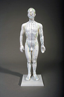 "20"" Tall Male Acupuncture Model NEW"