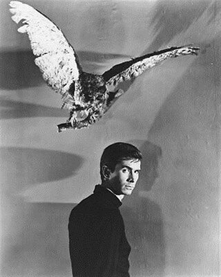ANTHONY PERKINS AS NORMAN BATES FROM PSYCHO 8x10 Photo fine photo 176586