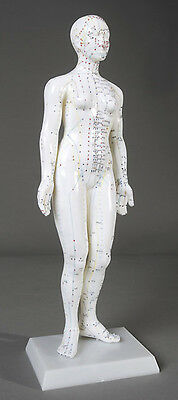 "19"" Tall Female Acupuncture Anatomical Model NEW"