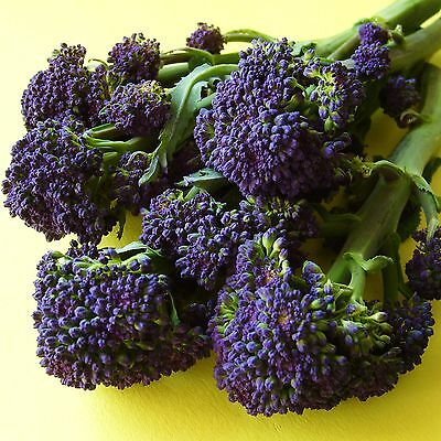 SPROUTING BROCCOLI - PURPLE LATE - 1200 Seeds [Crops from mid March - end May]