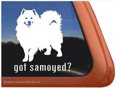 GOT SAMOYED? High Quality Vinyl Dog Auto Window Sticker Decal