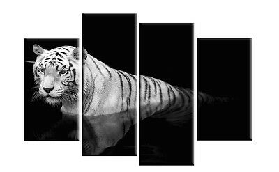 Extra Large White Tiger on Black Canvas 5ft wide multi 4 panel mounted rdy2hang
