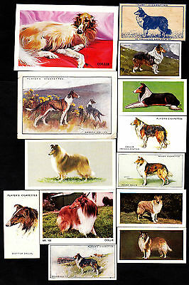 Lot Of 21 Different Vintage Rough Coated Collie Dog Cigarette Cards