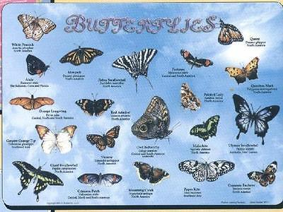Butterflies  Activity Placemat
