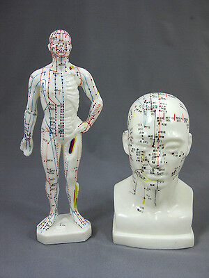 "Head & 11"" Tall Male Acupuncture Anatomical Model Set,  NEW"