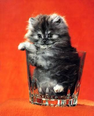 Tiny Kitten in a Glass: 8x10 In. Photo Art Print