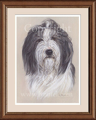 BEARDED COLLIE head portrait fine art print by Lynn Paterson