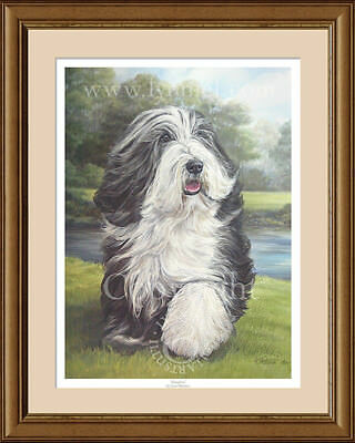 BEARDED COLLIE Fawn Beardie fine art print by Lynn Paterson