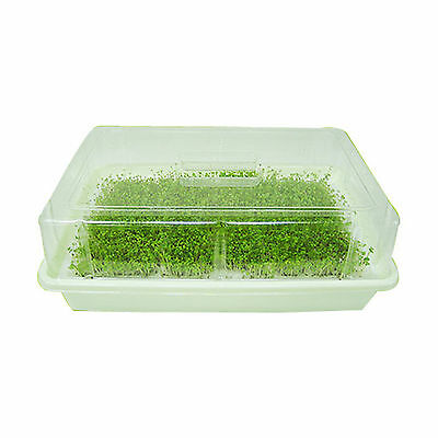New GreenZone YoungSu Sprout Growing Cultivatior Home Garden No pollution [1p]