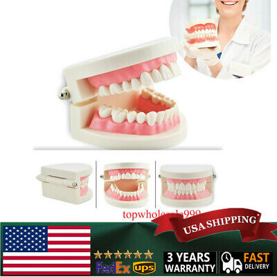 Flesh Pink Dental Study teach Adult Standard Typodont Demonstration Teeth Model