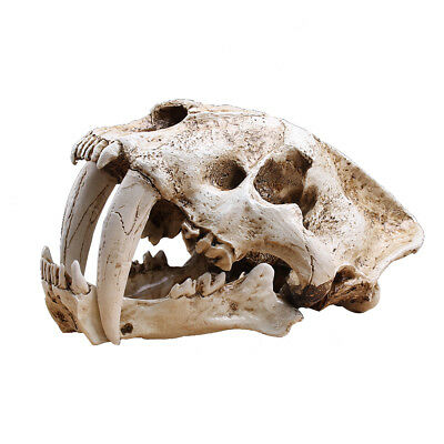 Saber Tooth Cat Tiger Skull SaberTooth Smilodon Fatalis Model White Color 1:1