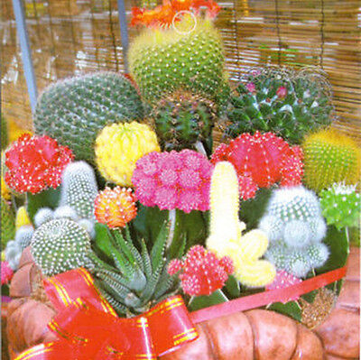 1 Bag 10 Seeds Mixture Of Cactus Flower Color Plant free shipment JNMO