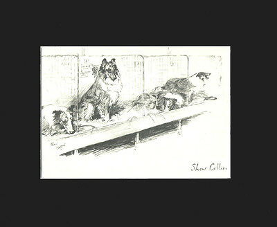 Vintage Cecil Aldin 1939 Print: Collie Dogs Matted AT THE DOG SHOW