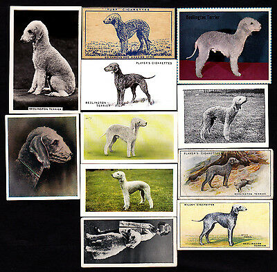 11 Different Vintage Bedlington Terrier Tobacco/Candy Cards