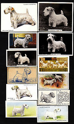 20 Different Vintage Sealyham Terrier Tobacco/Candy Dog Cards