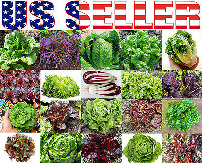 300+ ORGANICALLY GROWN Lettuce Mix 20 Varieties Heirloom NON-GMO Rare For Salad