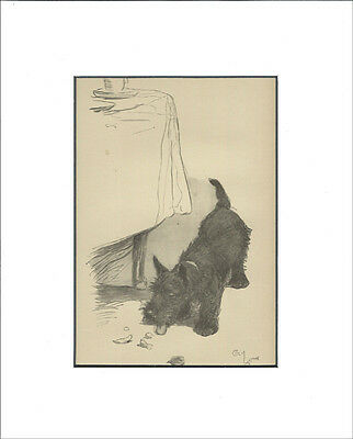 Scottish Terrier Dog  Print 1932  by Cecil Aldin 8x10 White Mat (Eating Crumbs)