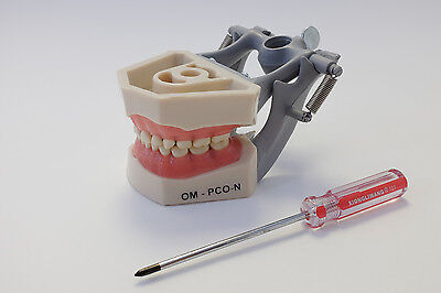 Dental Anatomy Typodont Educational Pediatric Kit Removable Teeth NBDE NERB ADEX