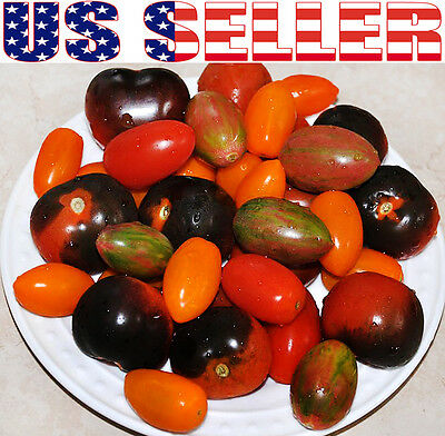 30+ ORGANICALLY GROWN Cherry Tomato Mix Seeds 10 Varieties Heirloom NON-GMO USA