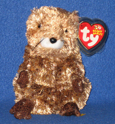 TY PUNXSUTAWN-E PHIL 2003 the GROUNDHOG BEANIE BABY - MINT with MINT TAGS