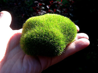 M00010 MOREZMORE 1 Artificial Fake Faux Emulation Moss Fuzzy Stone Ball Rock