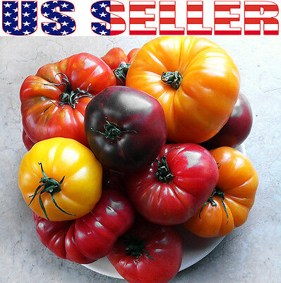 30+ ORGANICALLY GROWN Deluxe Tomato Seed Mix 16 Varieties Giant Heirloom NON-GMO
