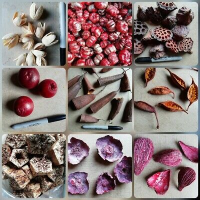Dried Seed Pods, Seed, Cones, Grass, Tropical, Nuts , Fruit etc for crafts