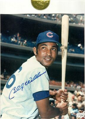 Billy Williams signed 8 x 10 notarized HOF Chicago Cubs
