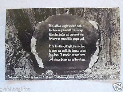 RPPC CA.SHRINE OF THE REDWOODS TREES MYSTERY PARK HWY REAL ZAN PHOTO BW POSTCARD