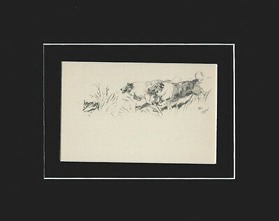 Vintage Cecil Aldin 1939 Print: Collie Dogs Matted CHASING A RABBIT!