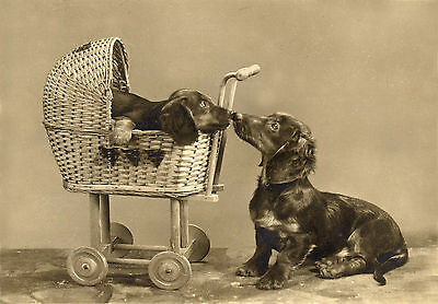 Dachshund Dog With Puppy in Buggy Vintage Photo  LARGE New Blank Note Cards