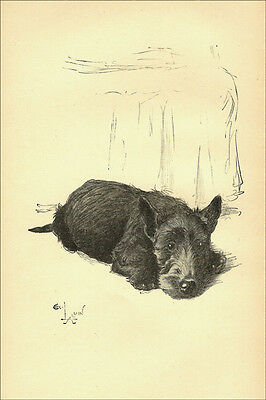 Scottish Terrier Puppy Dog 1932 by Cecil Aldin  LARGE New Blank Note Cards