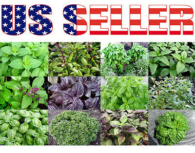 100+ ORGANICALLY GROWN Basil Mix Seeds 12 Varieties Heirloom NON-GMO Tulsi Thai